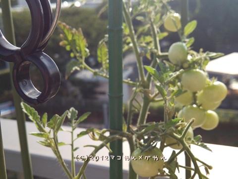 our garden3