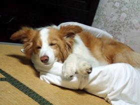 寝てる写真ばっかで