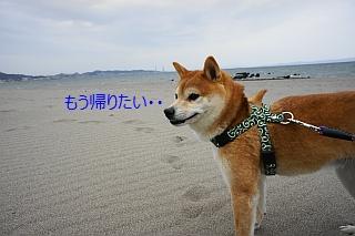三浦海岸エイト