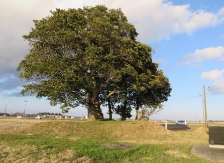 2014_03 21_田園の中の大きい木々・1