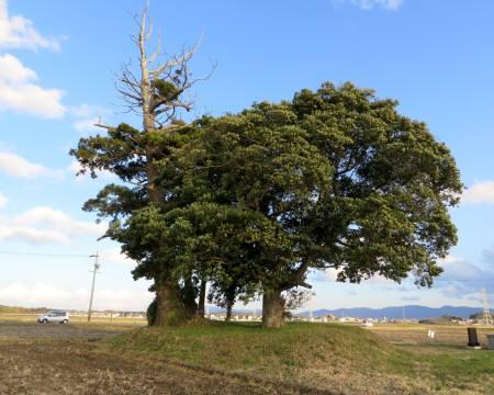 2014_03 21_田園の中の大きい木々・2
