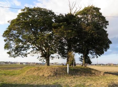 2014_03 21_田園の中の大きい木々・3