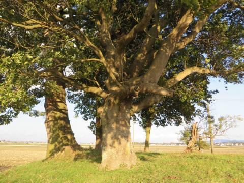 2014_03 21_田園の中の大きい木々・4