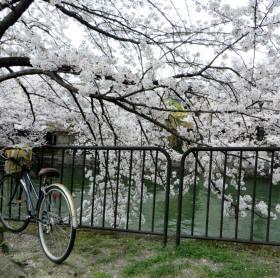 2014_04 03_疏水、自転車、桜