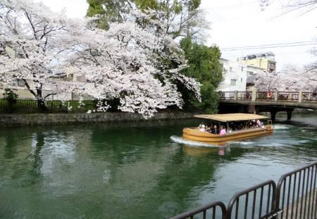 2014_04 03_疏水、桜、観光船