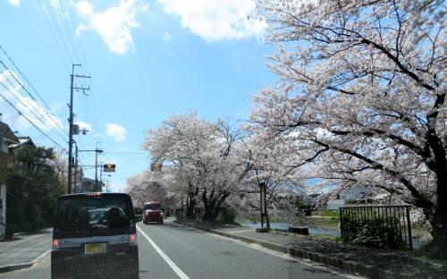 2014_04 06_桜、春霞の中を村の家へ