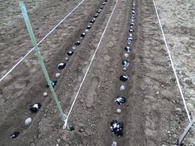 2014_04 08_じゃが芋・溝2本並べて肥料を置く