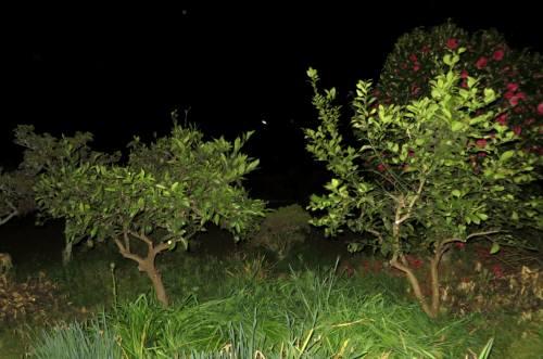 2014_04 22_夜のミカン、レモン