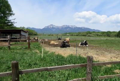 25-2014_06 02_野外の牛
