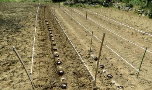 2014_04 09_じゃが芋・種イモ植え