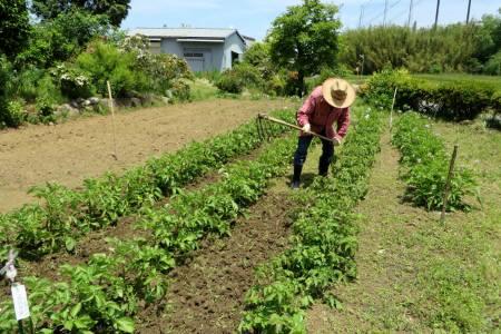 2014_05 28_じゃが芋・雑草引きと土寄せ