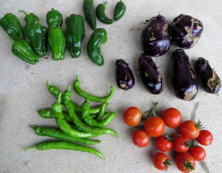 2014_07 09_野菜がいろいろ穫れ始めたが、