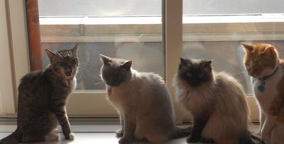 4猫たち201404