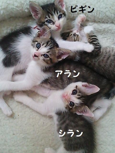 20140901K口子猫