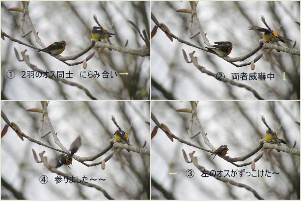 1-2014-04-221_t.jpg