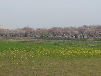 funakawa2014-4-4.jpg