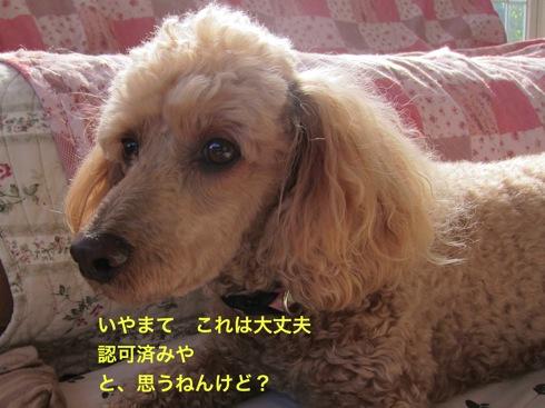 th_IMG_6998-1.jpg