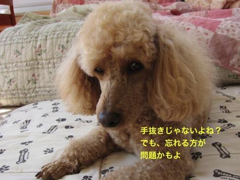 th_IMG_7055-1.jpg