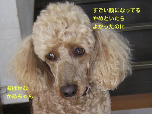 th_IMG_7080-1.jpg