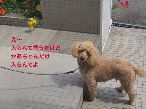 th_IMG_7138-1.jpg