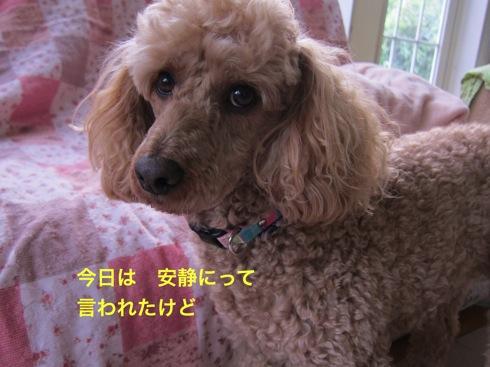 th_IMG_7172-1.jpg