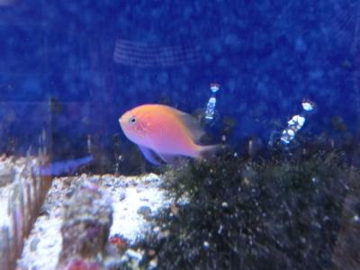 海水魚 005