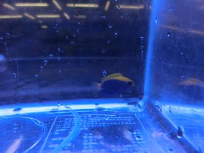 海水魚 002