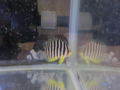 海水魚 010