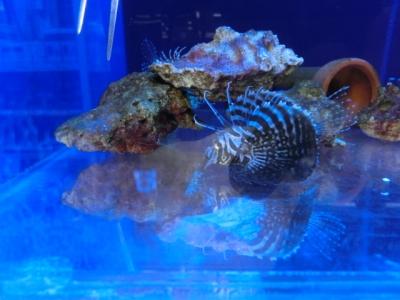 海水魚 019