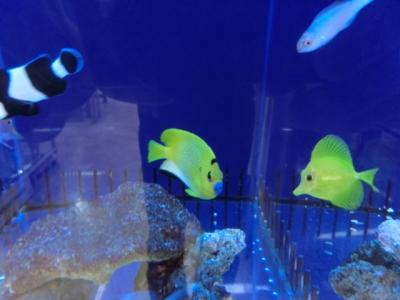海水魚 025