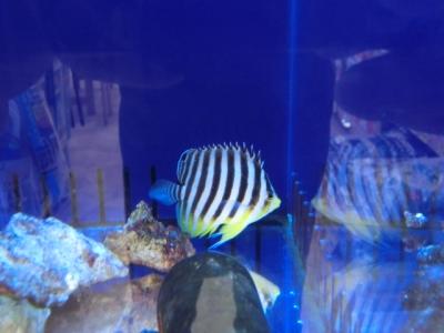 海水魚 024