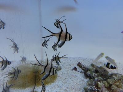 海水魚 028