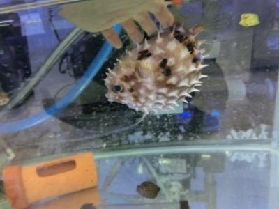 海水魚 035