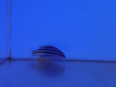 海水魚 031