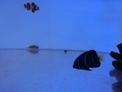 海水魚 033