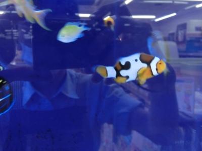 海水魚 034
