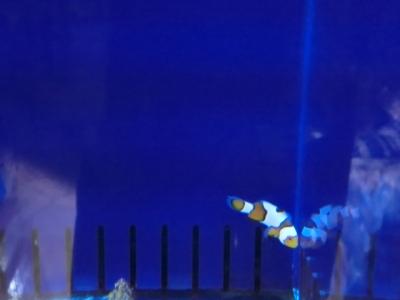 海水魚 036