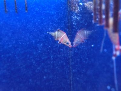 海水魚 042