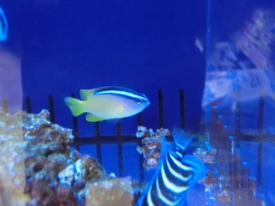海水魚 038
