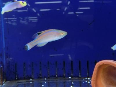 海水魚 039