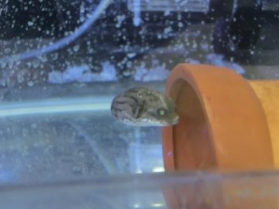 海水魚 041