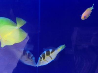 海水魚 047