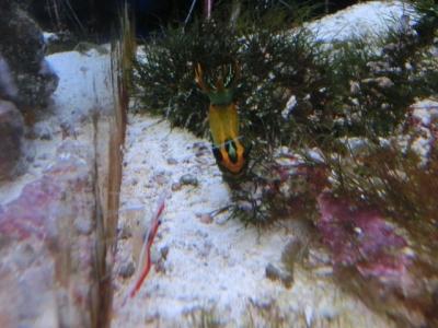 海水魚 052