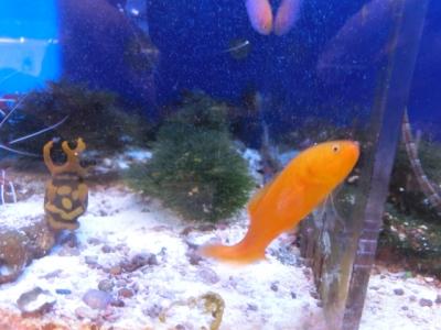海水魚 049