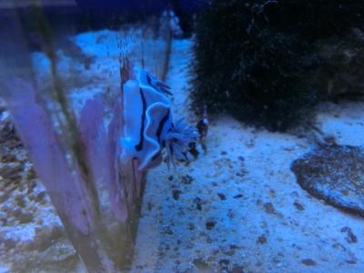 海水魚 051
