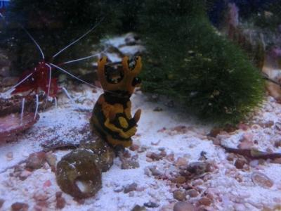 海水魚 053