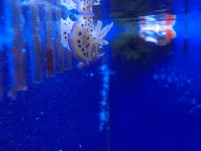 海水魚 054