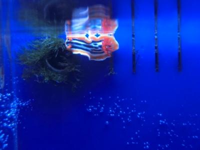 海水魚 055