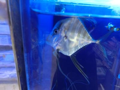 海水魚 062