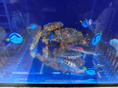 海水魚 059